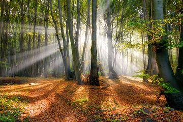 Zonnestralen in een mistig beukenbos in de herfst van Katho Menden