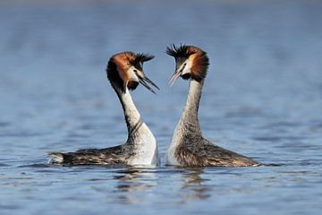 Love birds van Menno Schaefer