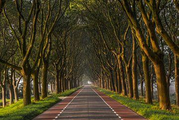 Avenue des arbres dans le Hoeksche Waard au lever du soleil sur MS Fotografie | Marc van der Stelt