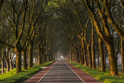 Bomenlaan in de Hoeksche Waard tijdens zonsopkomst