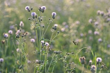 Paarse bloemen in veld von Jeantina Lensen-Jansen