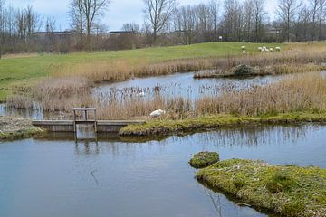 Landschap in Blokker von Eric de Kuijper
