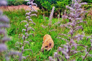 Schwein auf der Weide von Tom Hendrikx