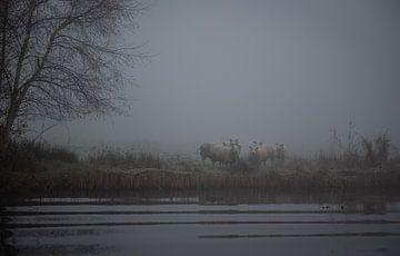 Schafe von Johan Vet