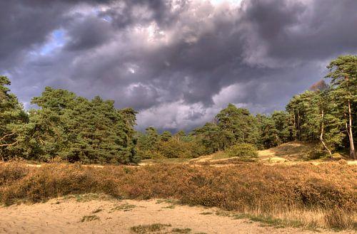 Bossen bij Otterlo van Sigrid Klop