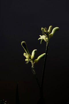 Gelbe Blume mit dunkelem Hintergrund von Ingrid Meuleman
