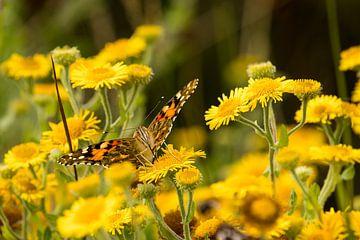 Schmetterling auf Sommerblumen essen von Arthur Scheltes