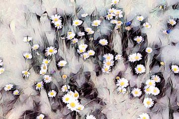 Gänseblümchen Aquarell