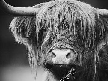 Schottischer Hochlandbewohner von Mark van der Walle