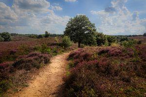 Heath landscape with purple heather flowers