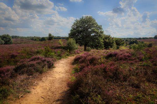 Heidelandschap met paarse heide bloemen van