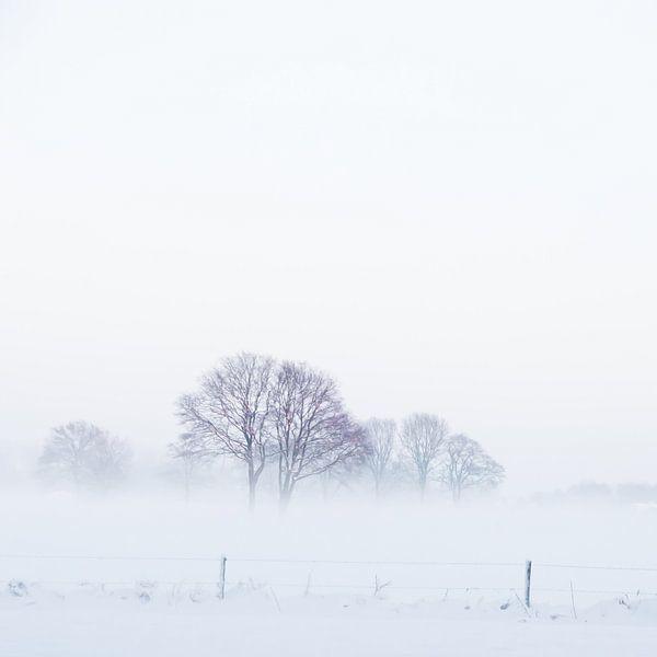 WinterMist van Foto NVS