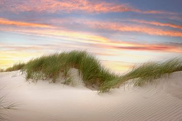 dunes sur Martin Rijpstra