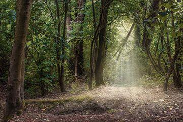 Magical forest von Elianne van Turennout