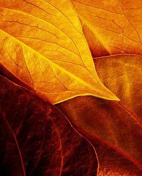 bladeren, Luiz Laercio van 1x
