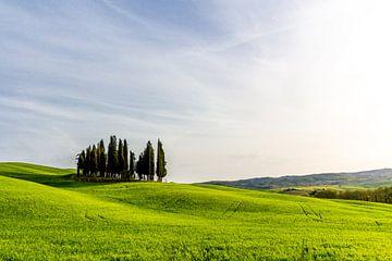 Hügel mit Bäumen in der Toskana von Mickéle Godderis