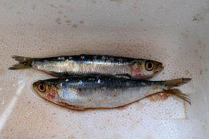 Sardines van