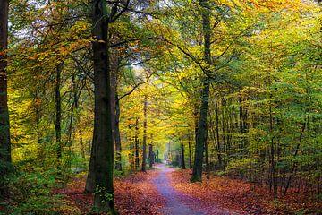 """Waldlandschaft """"Ein schmaler Pfad"""" von"""