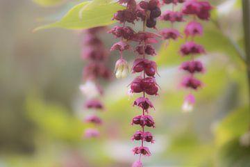 violette Anhänger von Tania Perneel