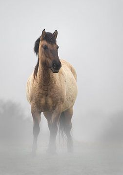 Konikpaard van Karel Ton