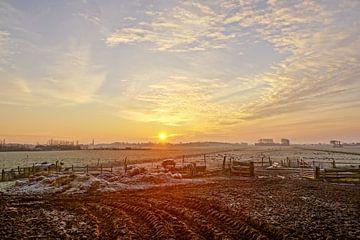 grazende schapen met zon op de achtergrond van Dirk van Egmond