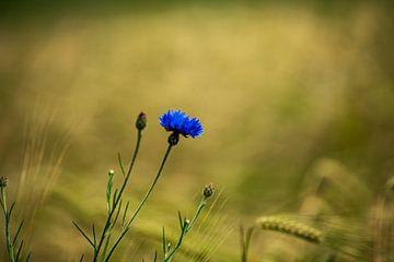 Blauwe bloem van Jefry Deuze
