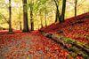 Herfst - Sweet Dreams van Cho Tang thumbnail