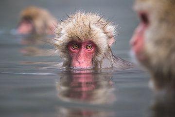Mmmm, das heiße Wasser ist so köstlich! von Koen Hoekemeijer