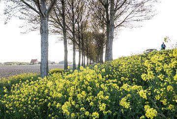 Holland - Koolzaad van Maurice Weststrate