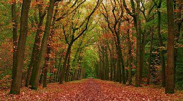 Herfst-Wandeling van Caroline Lichthart