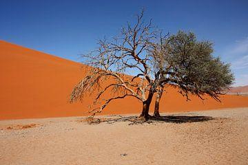 NAMIBIA ... Namib Desert Tree IV van Meleah Fotografie
