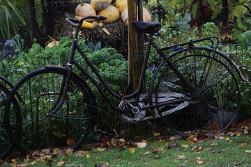 Oude fiets van Vercruysse Paulien