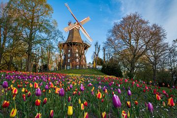 Tulpen bij de windmolen in Bremen van Michael Abid