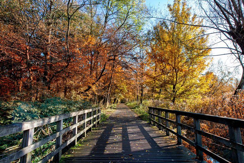 Mooie herfstscène in het stadspark 'kralingse bos'' van Rotterdam, Nederland. van Tjeerd Kruse