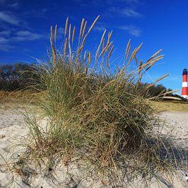 Sylt - Leuchtturm Hörnum hinter einem Grasbüschel von Frank Herrmann