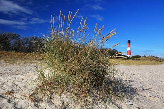 Sylt - vuurtoren Hörnum achter een plukje gras