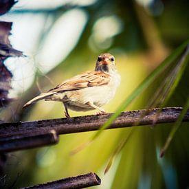 Bird is the word van Bram van Kattenbroek