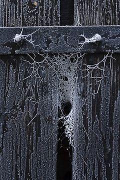 Bevroren web in de kier van een houten deur sur Juriaan Wossink