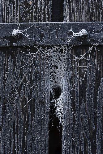 Bevroren web in de kier van een houten deur van