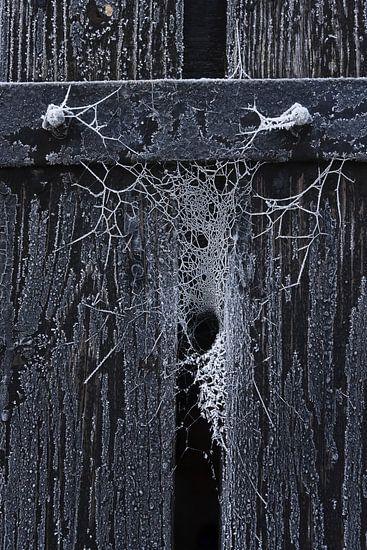Bevroren web in de kier van een houten deur van Juriaan Wossink