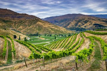 Wijnvelden in Nieuw Zeeland van Antwan Janssen