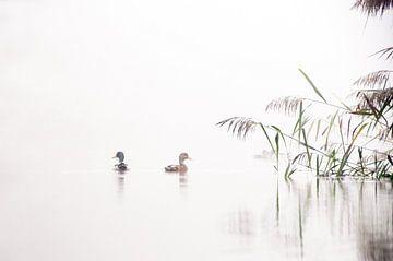 Eendjes in de mist von Ilja Kalle