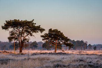 Koude februari ochtend van Marianne van der Westen