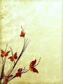 Schmetterlingsstrauch von Rudy & Gisela Schlechter