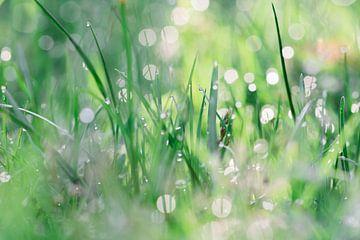 Bokeh durch Tau/Regentropfen im Gras von Jaike Reinders
