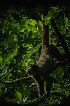 Affe von Hennie Zeij