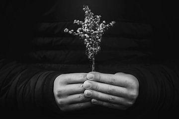 Handen en plantje von Maren Oude Essink