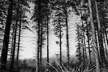 Bomen in de natuur van