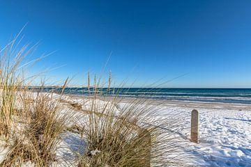 Winter: Duingras, sneeuw op het strand in Juliusruh op het eiland Rügen van GH Foto & Artdesign