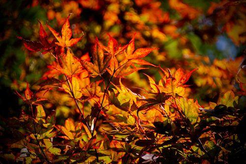 Herfstbladeren aan de boom